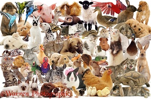 Pets montage jigsaw