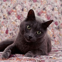 Grey cat on floral material