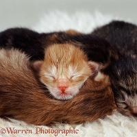 Kittens asleep in a heap