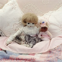 Silver kittens asleep with doll and soft toy mouse