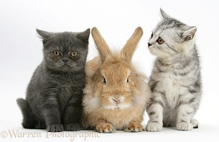 Two kittens and a rabbit