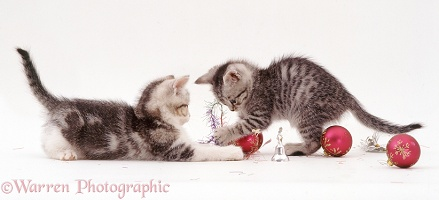 Silver tabby kittens playing with baubles