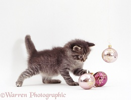 Silver tabby kitten playing with baubles