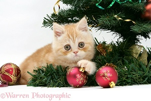 Ginger kitten playing with a Christmas tree