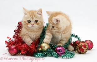 Ginger kittens with tinsel and Christmas baubles