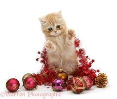 Ginger kitten with red tinsel and Christmas baubles