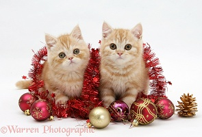 Ginger kittens with red tinsel and Christmas baubles
