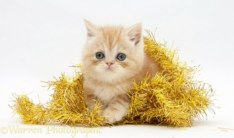 Ginger kitten with yellow tinsel