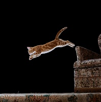 Ginger kitten leaping from a chair arm