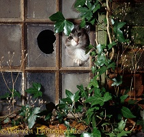 Cat in broken window