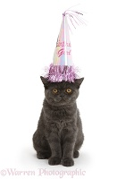 Grey kitten wearing a birthday party hat