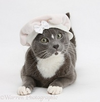 Blue-and-white Burmese-cross cat wearing a baby hat