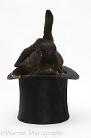 Black rabbit in a top hat