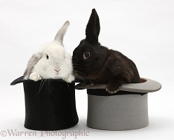 White rabbit and black rabbit in top hats