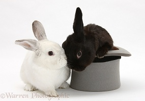 Black rabbit in a top hat with white rabbit