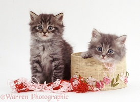 Two kittens with embroidery silks