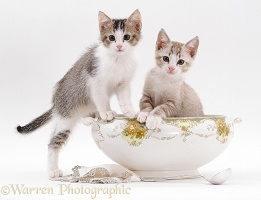 Two kittens in the soup!