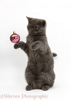 Grey kitten playing with Christmas bauble