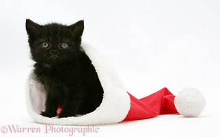 Black kitten in a Santa hat
