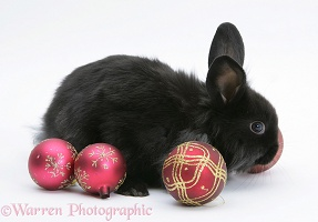 Black baby rabbit with Christmas baubles