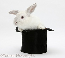 White rabbit in a top hat