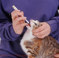 Antibiotic Eye Drops For Cats Uk