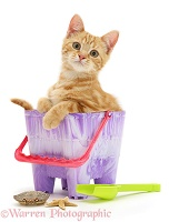 Ginger kitten in a beach bucket