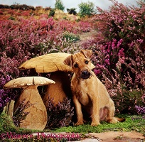 Terrier pup with wooden mushrooms