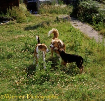 Dogs meeting in the garden