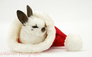 Baby rabbit in a Santa hat