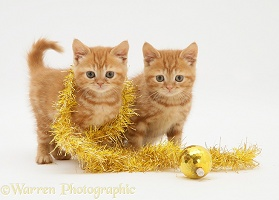 Red tabby kittens with tinsel and Christmas bauble