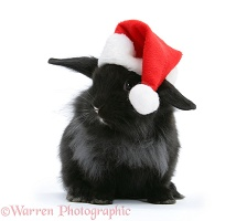 Black baby rabbit with Santa hat on