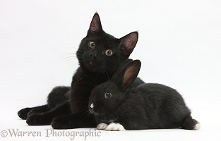 Black cat and black rabbit