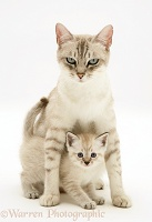 Birman-cross mother cat and kitten