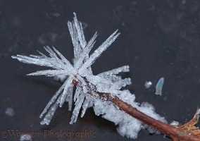Frost crystals on a fallen oak leaf