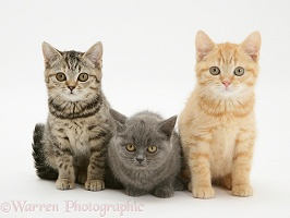 Three kittens