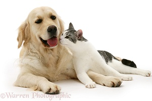 Cat and Golden Retriever