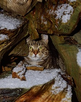 Tabby cat taking refuge among log pile