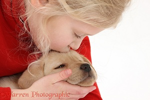Girl with Yellow Labrador Retriever puppy, 7 weeks old