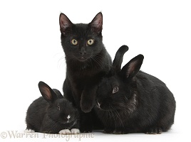 Black cat and black rabbits