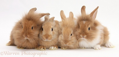 Four assorted Sandy rabbits