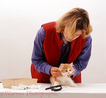 Vet examining a fluffy ginger-and-white kitten