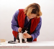 Vet examining a black-and-white kitten