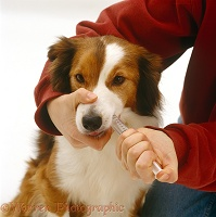 Administering a salt solution to a dog