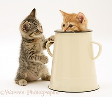 Tabby kitten with ginger kitten in an enamel pot
