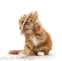 Ginger kitten with a straw hat on