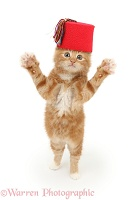 Ginger kitten wearing a red Fez hat