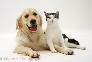 Cat and smiley Golden Retriever