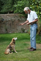 Man training an older dog