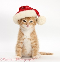 Ginger kitten wearing a Santa hat